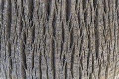 Miarowy fabuły drzewa cortex Fotografia Stock