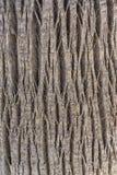 Miarowy fabuły drzewa cortex Zdjęcie Royalty Free
