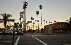 Miast drzewka palmowe Fotografia Stock