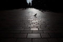 Miasta życie Fotografia Stock