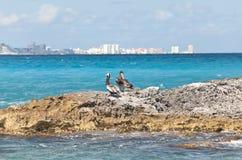 miasta dist pelikanów skalisty seacoast Obrazy Royalty Free