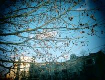 Miasta drzewo Obrazy Royalty Free
