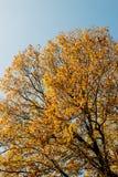 miasta dzień ramy liść klonu parka słońce Fotografia Stock