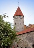 miasta Estonia ostrości średniowieczna część Tallinn góruje ścianę Tallinn, Zdjęcia Royalty Free