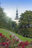 miasta Estonia sala stara Tallinn Thomas basztowa grodzka vane pogoda róże na ulicie i urzędu miasta wierza Obraz Royalty Free