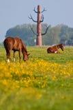miasta pastwiskowa koni łąka blisko Obrazy Royalty Free