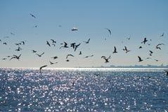 miasta seagulls sylwetka Fotografia Royalty Free