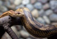 miasta węża zoo Obrazy Stock