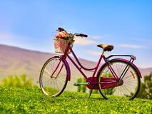 Miasto bicykl z kwiatu koszem na zielonej trawie przeciw niebieskiemu niebu Zdjęcia Royalty Free