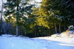 miasto blisko kolejowych drogowych połysk snow słońce zima drewno Zdjęcie Stock