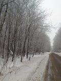 miasto blisko kolejowych drogowych połysk snow słońce zima drewno Drzewa zakrywają z mrozem i śniegiem Zdjęcie Stock