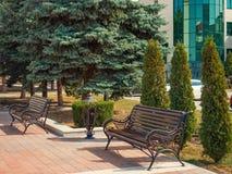 Miasto bulwaru ławki iglaści drzewa Obrazy Royalty Free