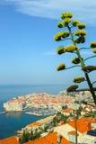 miasto Dubrovnik stary Obrazy Royalty Free