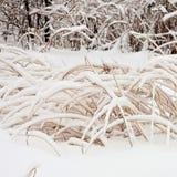 miasto 2006 Grudnia Nowosybirsku park Siberia zamieć Zdjęcia Stock