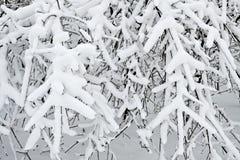 miasto 2006 Grudnia Nowosybirsku park Siberia zamieć Obrazy Royalty Free