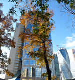 Miasto i drzewo Fotografia Stock