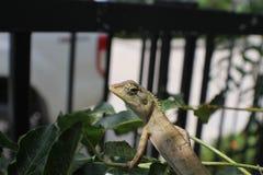 Miasto kameleonu życia Plenerowy spojrzenie wokoło zdjęcia royalty free