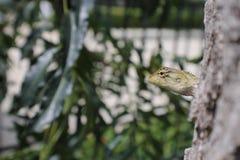 Miasto kameleonu życia Plenerowy spojrzenie wokoło obrazy stock