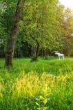 Miasto kamienia rzeźba łoś w parku 30th Października rocznica w wiosna zmierzchu wieczór w Veliky Novgorod, Rosja Zdjęcia Royalty Free