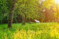 Miasto kamienia rzeźba łoś w parku 30th Października rocznica w wiosna zmierzchu wieczór w Veliky Novgorod, Rosja Fotografia Stock