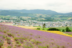 miasto kwiat Fotografia Stock