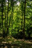 Miasto las Yalova, Turcja - Obraz Royalty Free