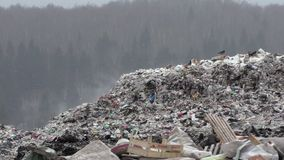 Miasto śmieciarski usyp zbiory wideo