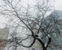 miasto nowy śnieżny York Obraz Royalty Free