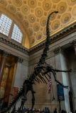 Miasto Nowy Jork muzeum Naturalnych nauk dinosaury Zdjęcia Stock
