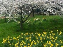 Miasto Nowy Jork ogród botaniczny Zdjęcia Royalty Free