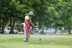 Miasto ogrodniczki kośby gazon zdjęcie royalty free