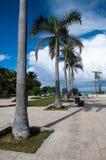 Miasto palmy Zdjęcie Stock