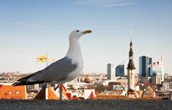 miasto panoramy mewy przednia morza Obrazy Royalty Free