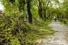 Miasto park po naturalnego kataklizmu Spada gałąź po katastrofy naturalnej i drzewo Miasto park po katastrofy Klęska w spri Obrazy Royalty Free