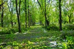 Miasto park po naturalnego kataklizmu Spada gałąź po katastrofy naturalnej i drzewo Miasto park po katastrofy Klęska w spri Obrazy Stock