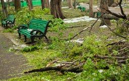 Miasto park po naturalnego kataklizmu Spada gałąź po katastrofy naturalnej i drzewo Miasto park po katastrofy Klęska w spri Zdjęcie Stock