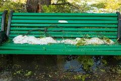 Miasto park po naturalnego kataklizmu Spada gałąź po katastrofy naturalnej i drzewo Miasto park po katastrofy Klęska w spri Obraz Royalty Free