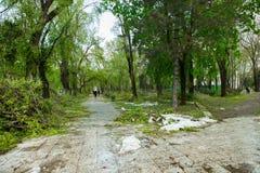 Miasto park po naturalnego kataklizmu Spada gałąź po katastrofy naturalnej i drzewo Miasto park po katastrofy Klęska w spri Zdjęcie Royalty Free