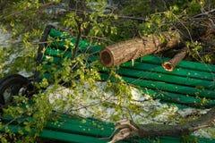 Miasto park po naturalnego kataklizmu Spada gałąź po katastrofy naturalnej i drzewo Miasto park po katastrofy Klęska w spri Fotografia Stock