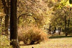 Miasto park w jesień ciepłym dniu zdjęcie stock