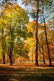 Miasto park w jesieni Zdjęcia Royalty Free