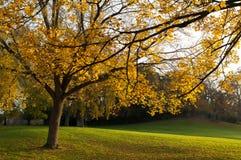 Miasto park w jesieni Obrazy Royalty Free