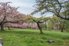 Miasto park W wiośnie 4 Zdjęcie Royalty Free