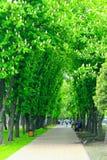 Miasto park z deptak ścieżki ławkami i dużymi zielonymi drzewami Zdjęcia Royalty Free