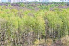 Miasto park z pierwszy zielonym ulistnieniem w wiosna fotografia stock