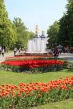 Miasto park z tulipanami i fontannami Obraz Royalty Free