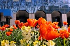 miasto wiosna obraz royalty free