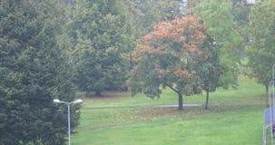 Miastowa drzewa i deszczu jesień 4K zbiory