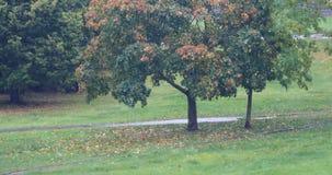 Miastowa drzewa i deszczu jesień 4K zdjęcie wideo