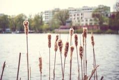 Miastowa jeziorna sceneria Obrazy Royalty Free